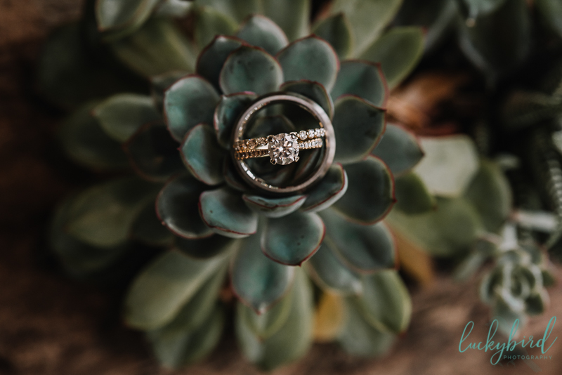 ring photo in succulents