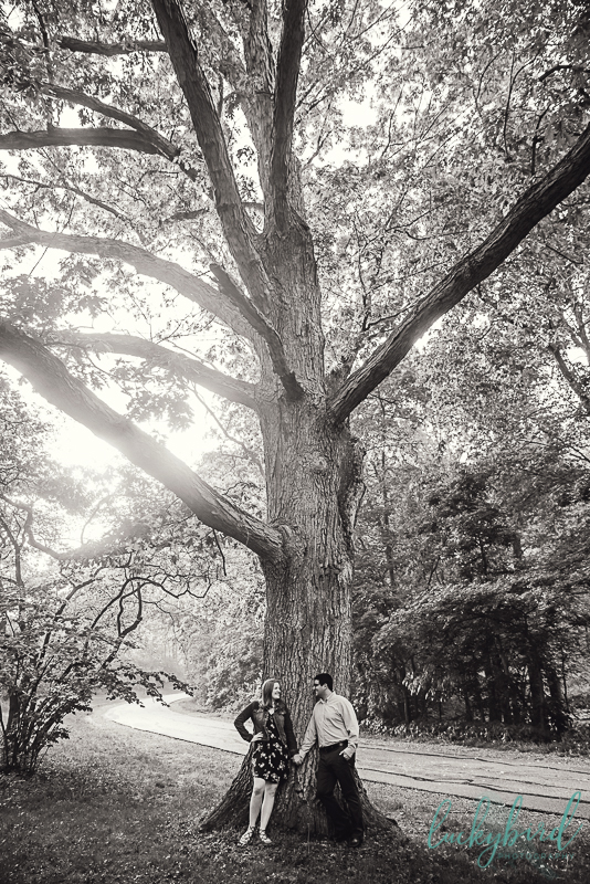 tall-tree-engagement-photo-at-wildwood