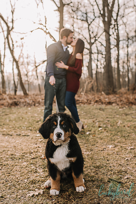 engagement-session-with-puppy-at-wildwood-park