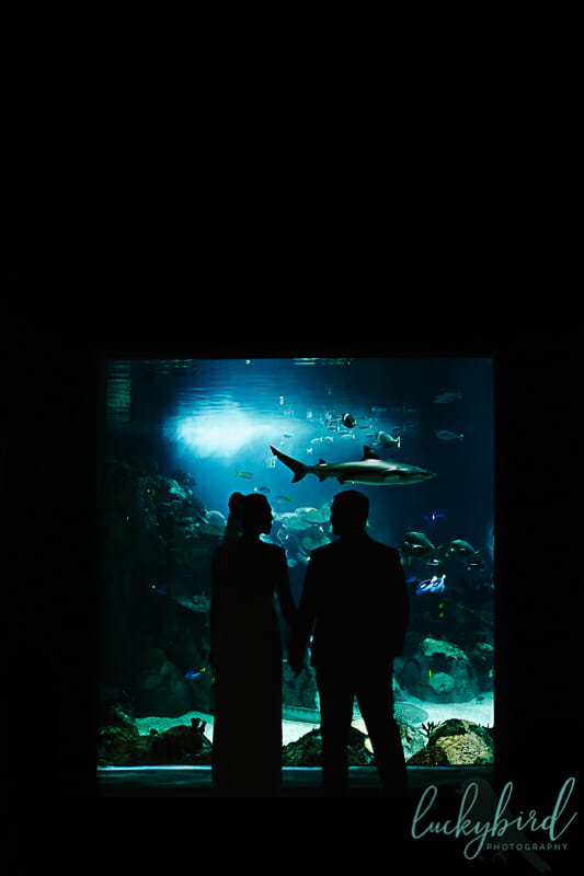 toledo zoo wedding in the aquarium