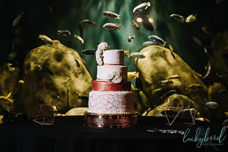 7 little cupcakes wedding cake at malawi toledo zoo