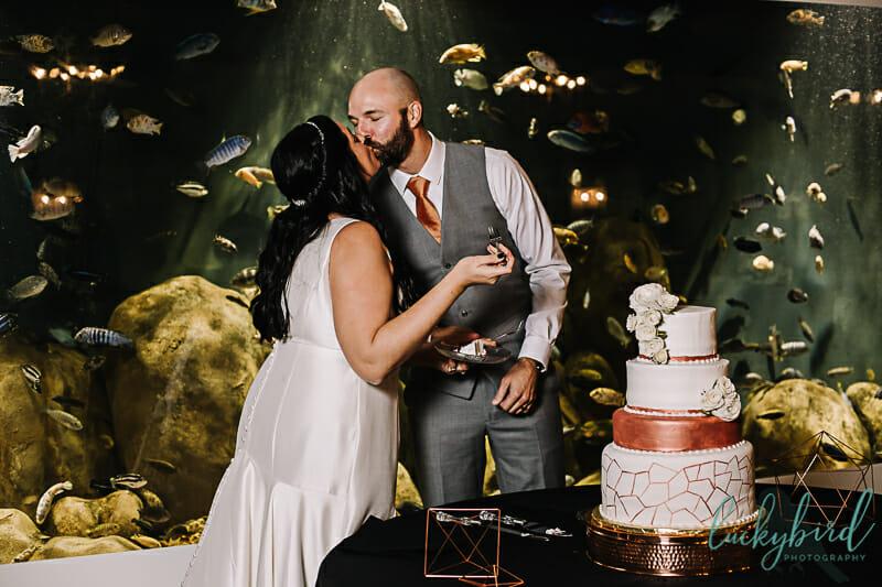 cake cutting at toledo zoo malawi wedding