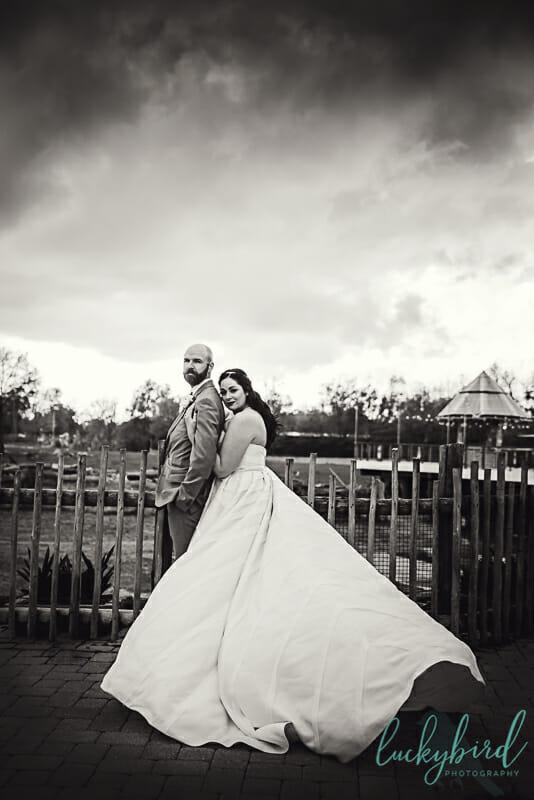 dramatic wedding photo at toledo zoo