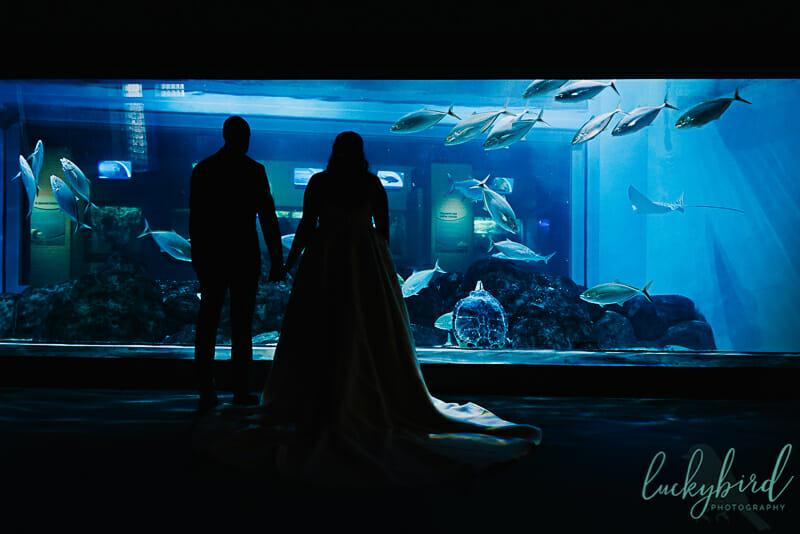 toledo zoo aquarium wedding photo