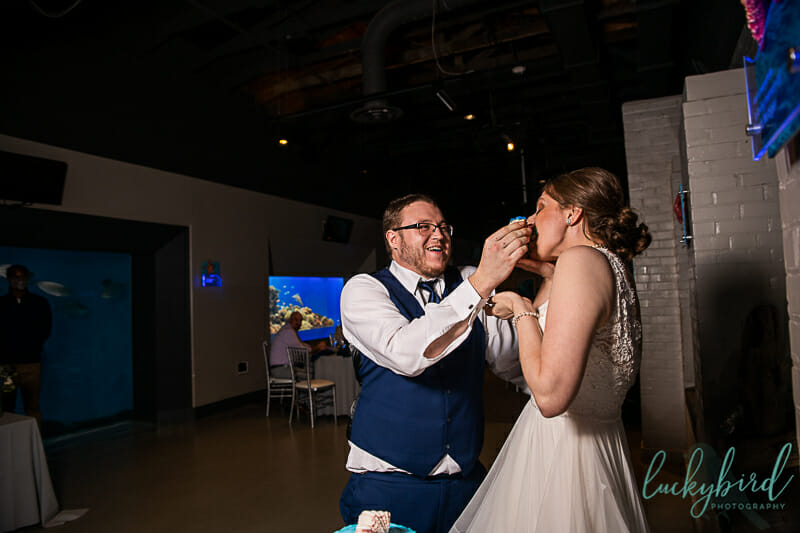 cake smash toledo zoo wedding