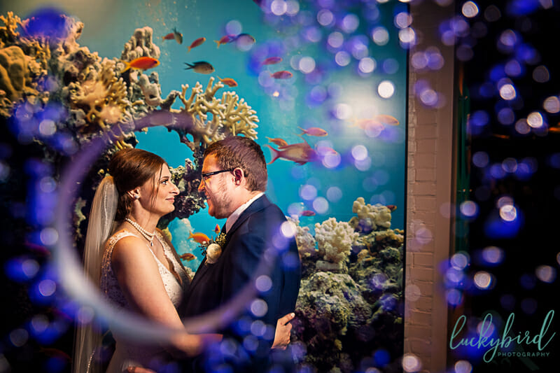 toledo zoo aquarium wedding