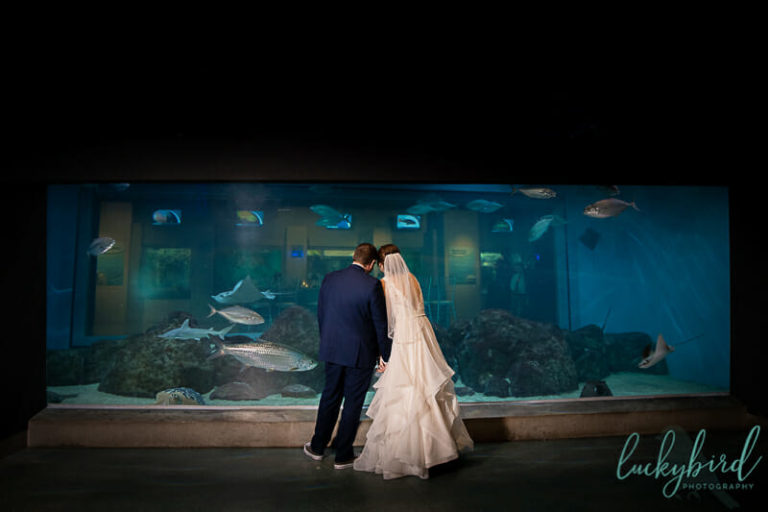 wedding at toledo zoo aquarium