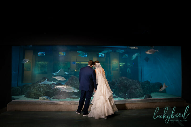Fun Toledo Aquarium Wedding