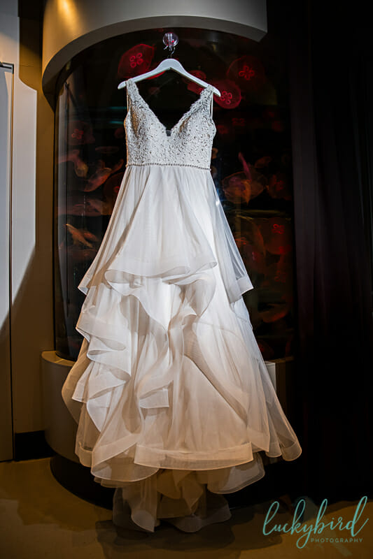 wedding dress hanging by jellyfish toledo zoo