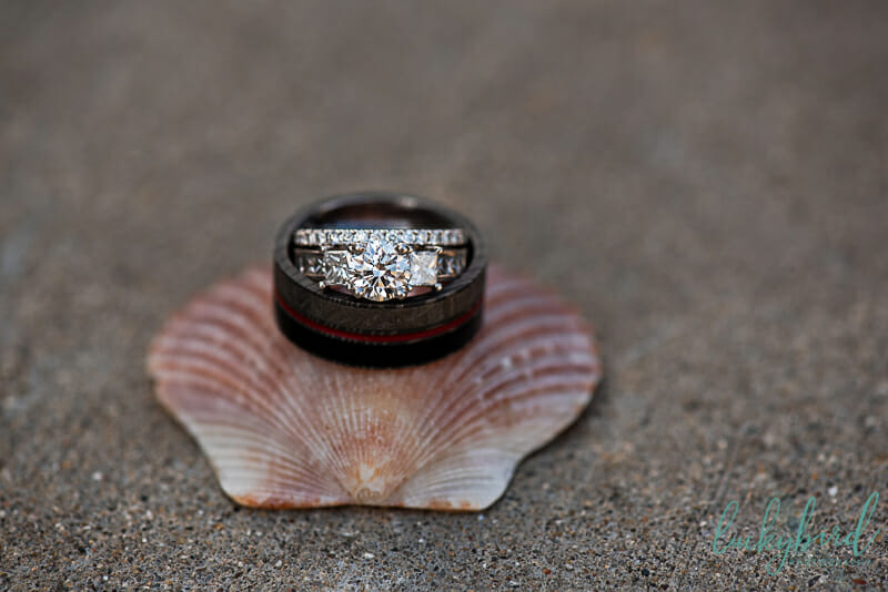 wedding rings on shells at toledo zoo