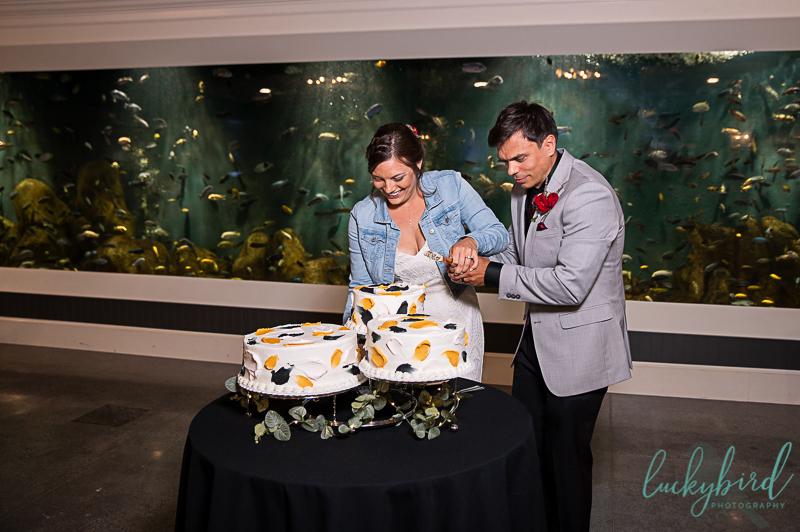 cake cutting at malawi toledo zoo wedding