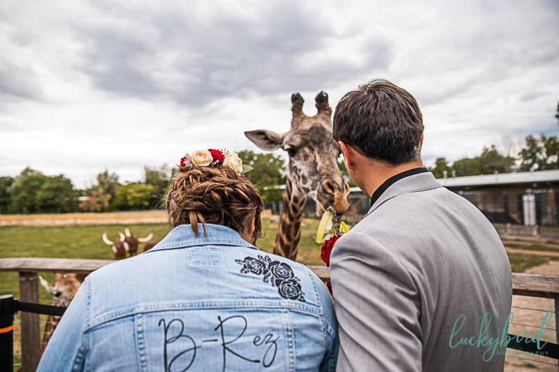 feeding giraffes at the toledo zoo wedding